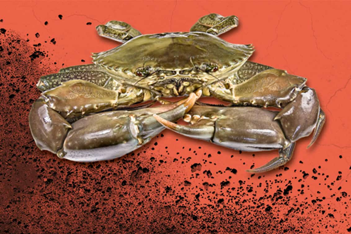 RP243-fb-crabs-5